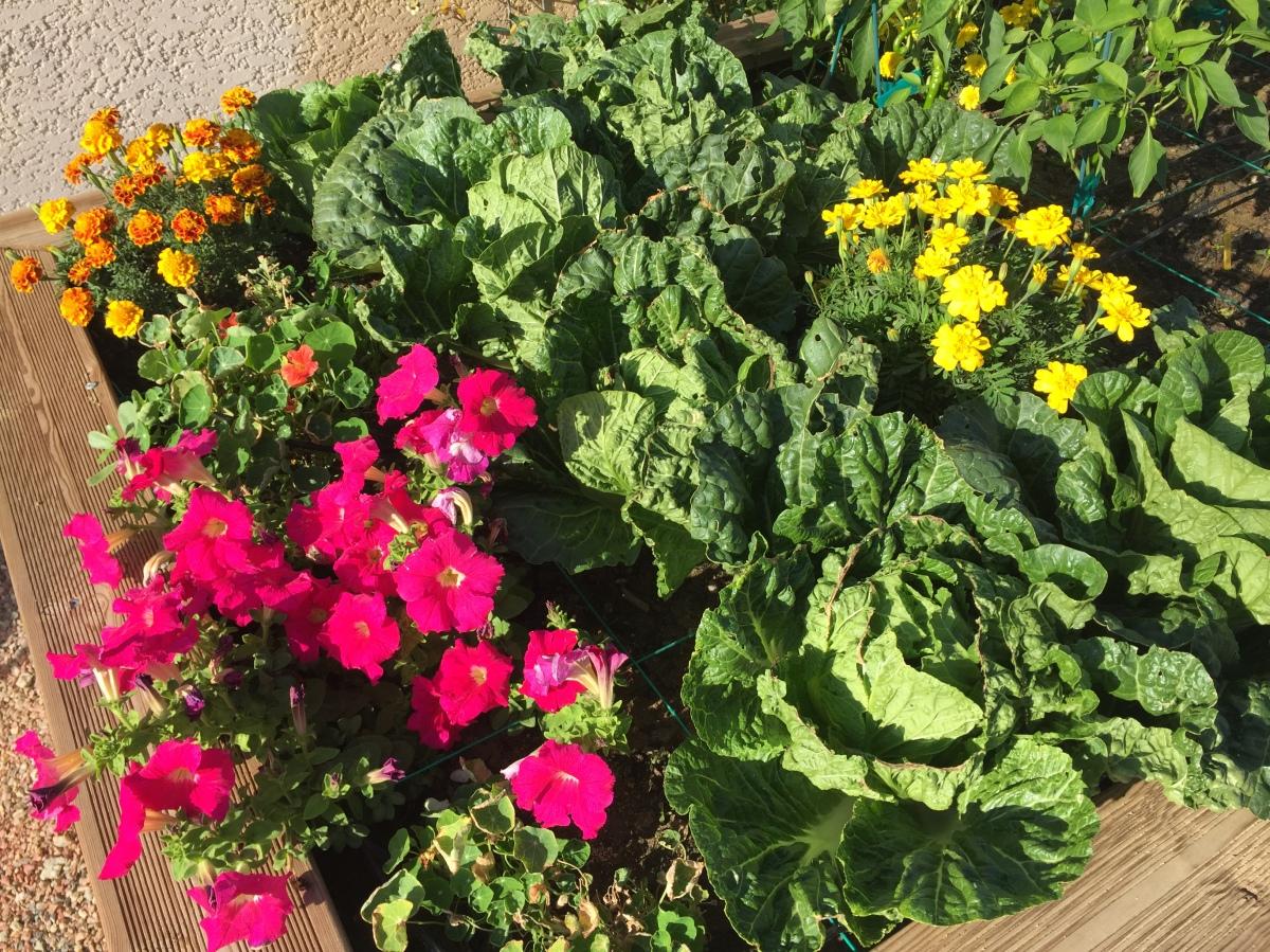 Le Potager – The VegetableGarden
