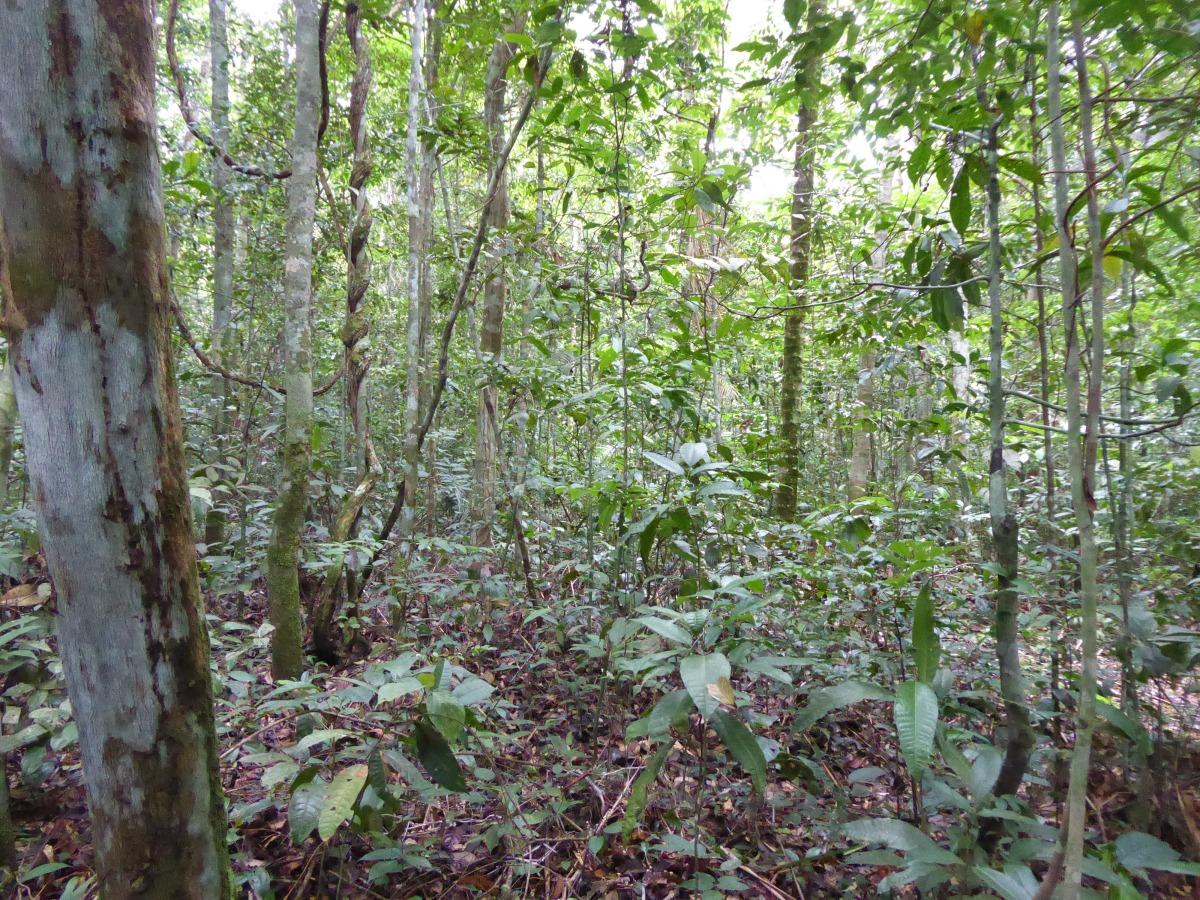 A walk in an Amazon forest